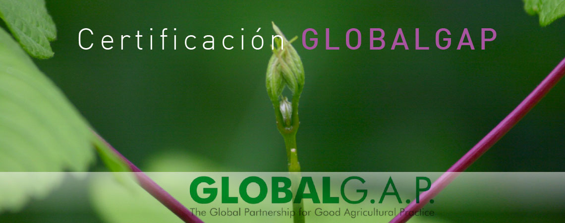 banner-globalgap